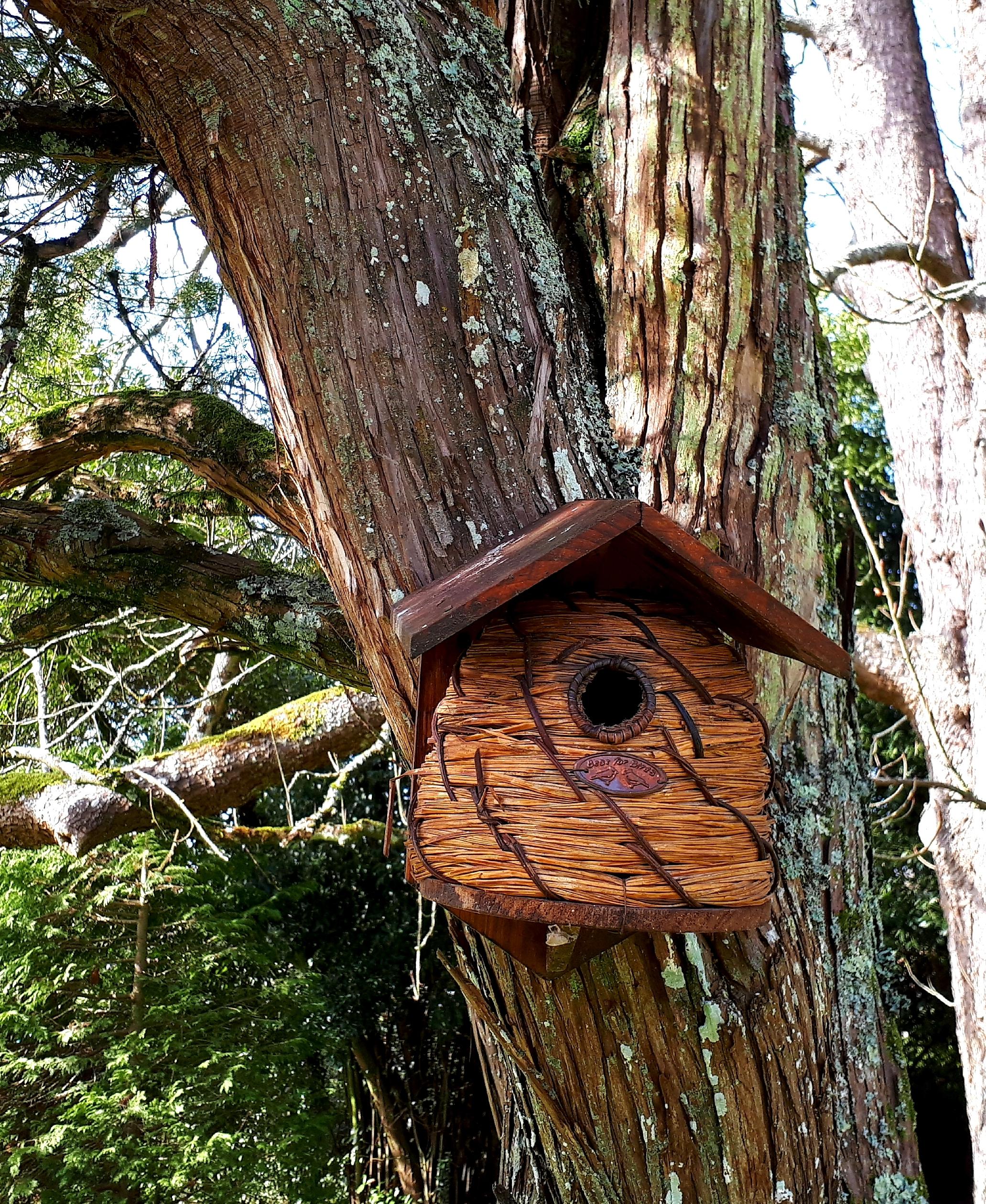 oiseaux-chambre-d'hôtes-domaine-de-garat-bordeaux.jpg